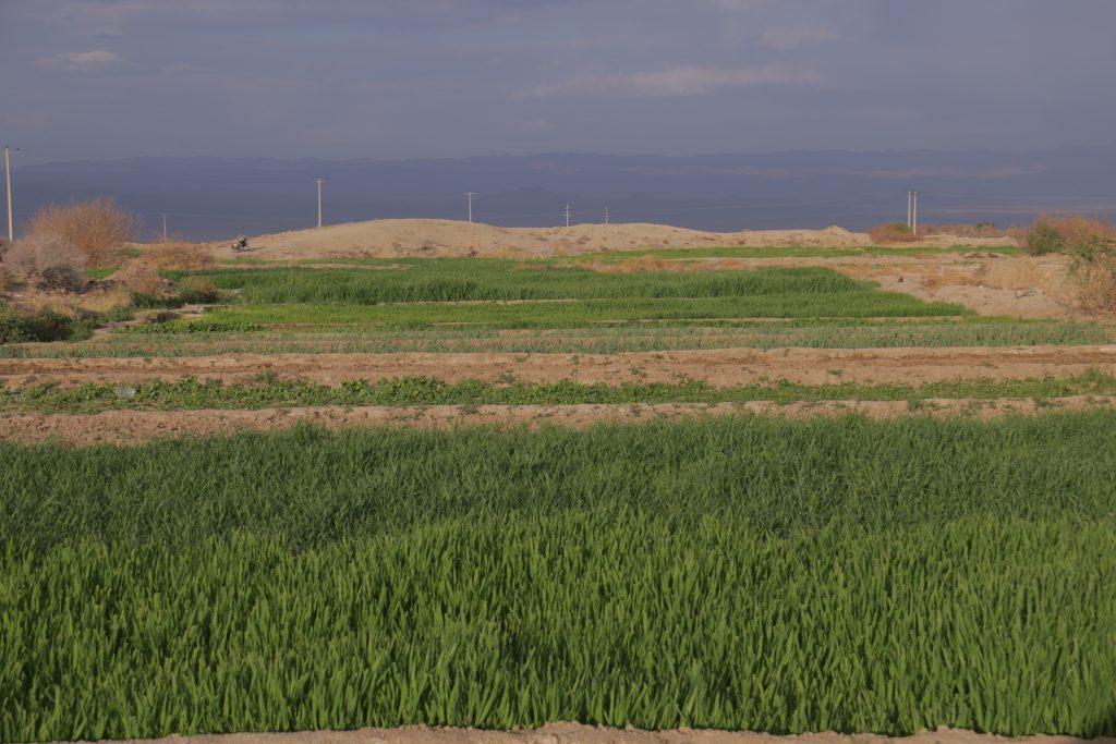کشاورزی در خراسان جنوبی