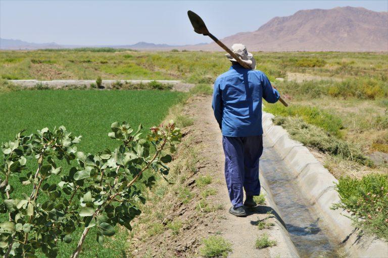 زراعت به امید باران