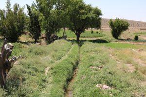 رونق کشاورزی